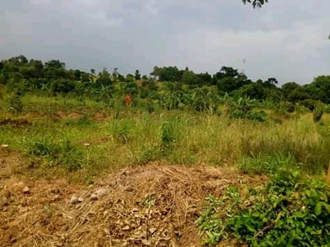 land for sale in bwerenga entebbe