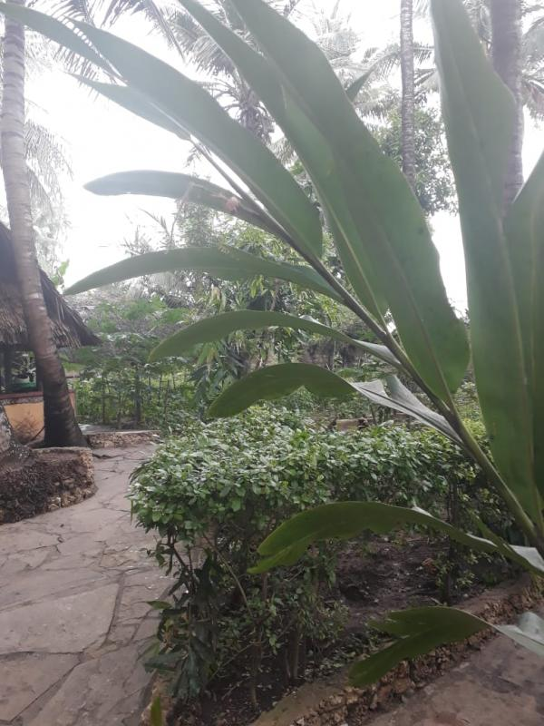 for sale, a 2-acre farm at Mtwapa Mtepeni area with a 4 bedrooms villa with all rooms ensuite