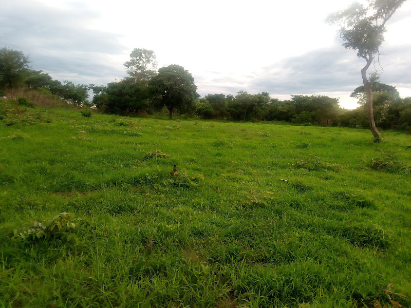 2  HECTARES LAND FOR SALE IN MAKENI